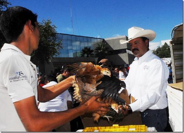 2012-10-19-pollas-ponedoras (1)
