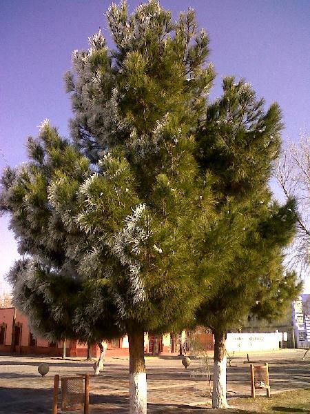 2012-01-06-escarcha (12)