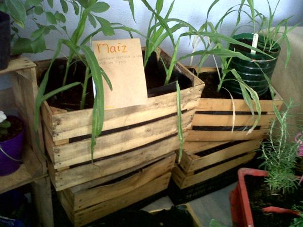 2013-06-08-agricultura-urbana (7)