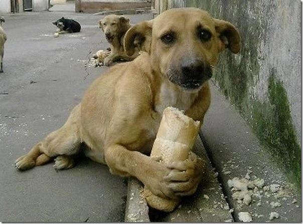 2016-09-26-perro-callejero-albergue (1)
